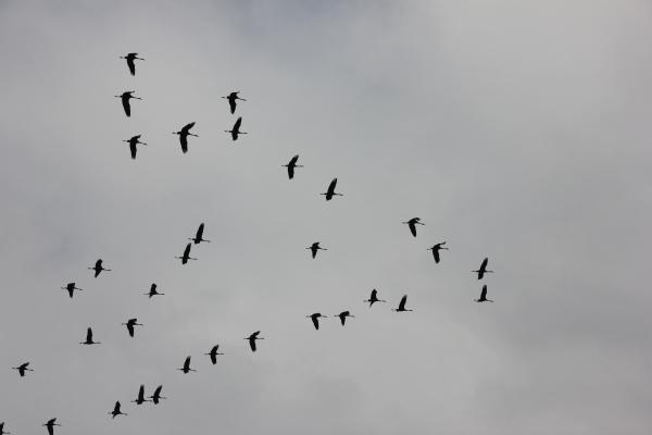 20121124 Hula Birds1