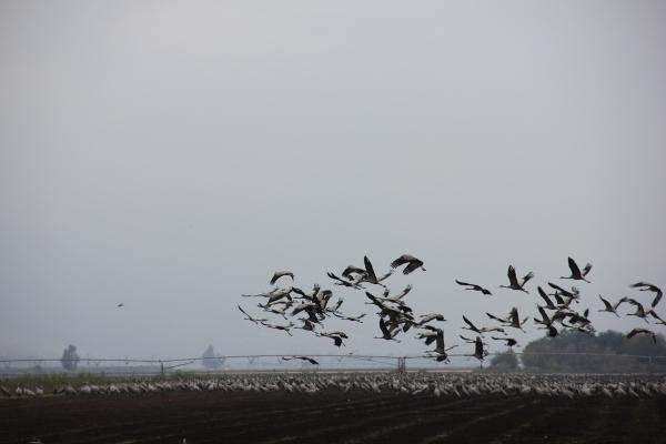 20121124 Hula Birds2