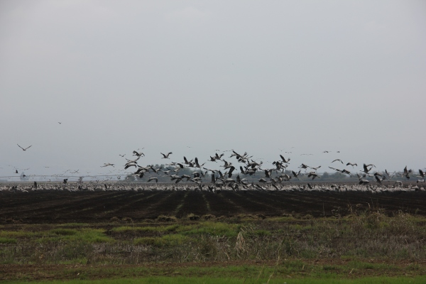 20121124 Hula Birds3